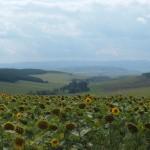 Landschap in de Cserehát