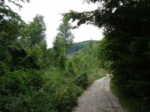 Veel kleine wegen doorkruisen de Bükk: ideaal voor wandelaar en fietser