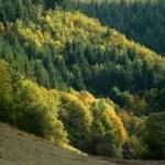 De Bükk in de herfst